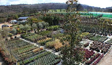 Riverside Nurseries near the River Thames